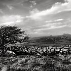Dartmoor mood by peteton