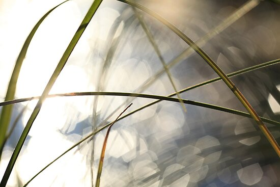 Grasses and sun reflections on a lake by intensivelight
