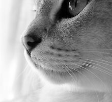 Cats Eyes (1) by Hayley Musson
