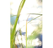 Grasses at the shore of a lake bathing in golden light Photographic Print