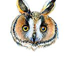 Long-eared owl by Redilion