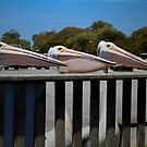 Three Pelicans by Elaine Teague