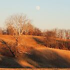 Cross under Sycamore Tree with the Moon by TrendleEllwood