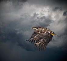 Eagle Power by Thomas Young