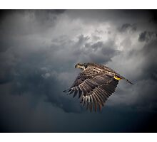 Eagle Power Photographic Print
