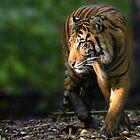 Jungle Walker by Sandra Chung
