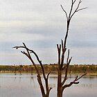 Dead Tree Digitised by jwwallace