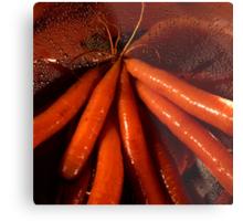 Tasty moist carrots in a colander Metal Print
