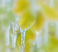 Icicles by Laurie Minor