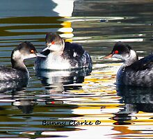 Grebes in Abstract by Bunny Clarke