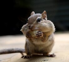 Hungry Chipmunk by Madeline Neff