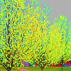 Bold Colors, Expressionistic Garden Pear Trees in Spring by DevFocus