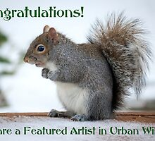 Urban Wildlife Banner - Squirrel by Mikell Herrick