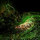 solitary cicada...a meeting with death by banrai