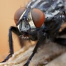 The Fly by Betsy  Seeton