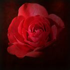 KEN'S ROSE by PatChristensen