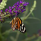 Monarch Butterfly by litbykristen