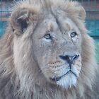 Dublin Zoo 1 by DES PALMER