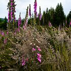 Just Blend In ~ Wildflowers ~ by Charles & Patricia   Harkins ~ Picture Oregon