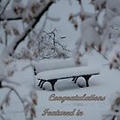 Lonely Bench with a Cover of Snow by karina5