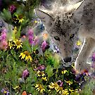 THE COYOTE by Betsy  Seeton