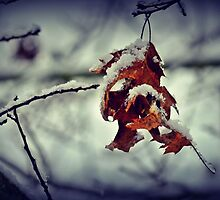 Snow on a Leaf by leighannaflora