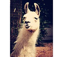 What The Llama Photographic Print