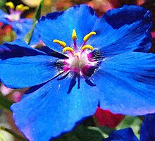 Blue pimpernel 1 by DrWhoJohnSmith