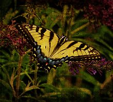 Power of the Butterfly by PineSinger