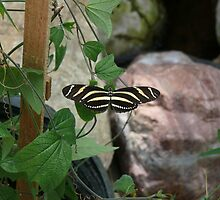 Zebra Longwing Butterfly by RayenMeraud