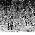 Winter Snow Trees by KellyHeaton