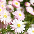 Springtime party - Australian everlastings by Kell Rowe