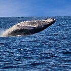 Breaching Whale by Kathy Weaver