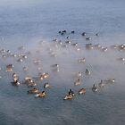 Ducks in Frozen Water by Timothy  Ruf