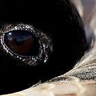 Goose Eye by Betsy  Seeton