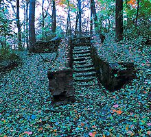 Forest Steps alternate colors by Timothy  Ruf