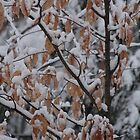 leaves and snow by corrado