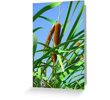 """""""Cattails"""" by Carter L. Shepard Greeting Card"""