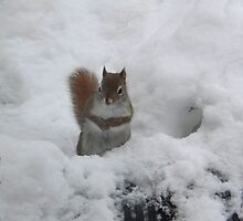 Squirrel in the Snow by Timothy  Ruf
