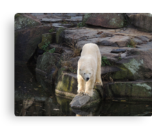 Polar Bear Rock (Berlin)  Canvas Print