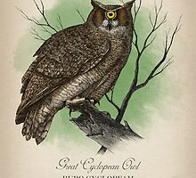 Great Cyclopean Owl by Howard Dale