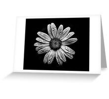 Backyard Flowers In Black And White 16 After The Storm Greeting Card