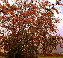 Tha Lampost and the Tree by printerbill