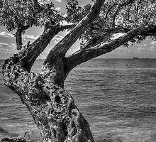 Gnarled Old Tree by njordphoto