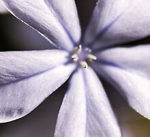 Tiny Flower by axemangraphics