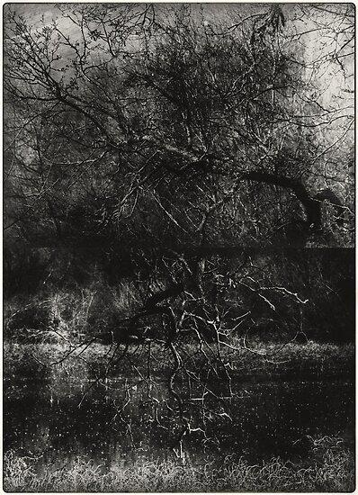 trunks by Jill Auville