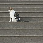 The Cat Sat... by pix-elation