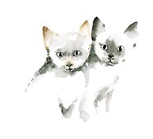 Cat Cats Photo Picture Brown Gray Little Funny Twins Pic Meow by Johana Szmerdt