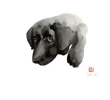 Black Dog Labrador Gold Golden Retriever Eye Portrait Animal Animals Pet Pets by Johana Szmerdt