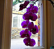 Looking Through The Orchid by Fara